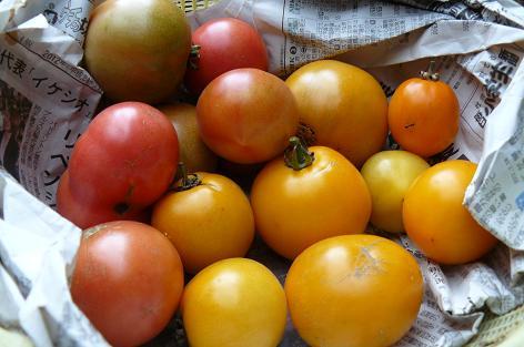 最後のトマト♪