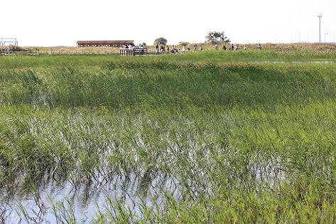 湿地が広がって♪
