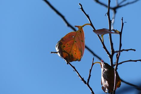 葉が落ちて♪