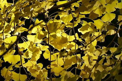 黒と金色♪