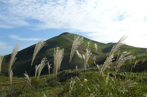 ススキの草原♪