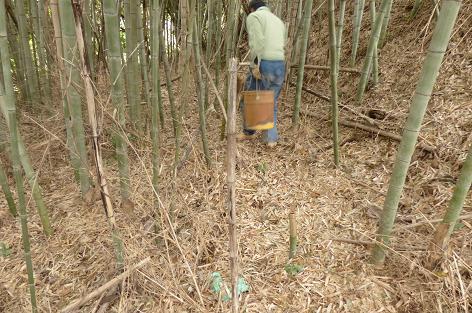 ハチクの竹藪♪