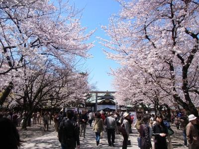 2012年桜 (12)
