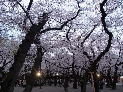 2012年桜 (21)