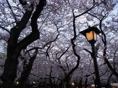 2012年桜 (20)