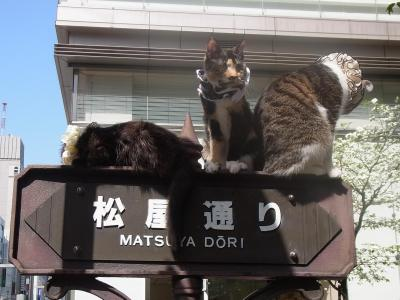 中央通り猫 (2)