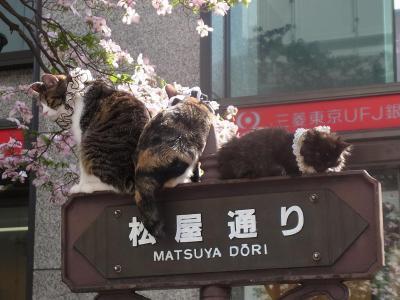 中央通り猫 (1)