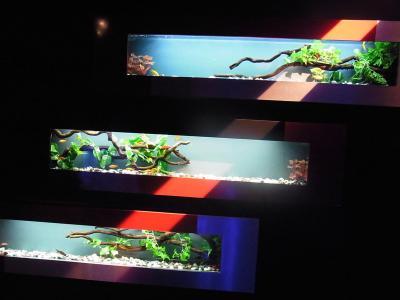 アートアクアリウム展 (12)