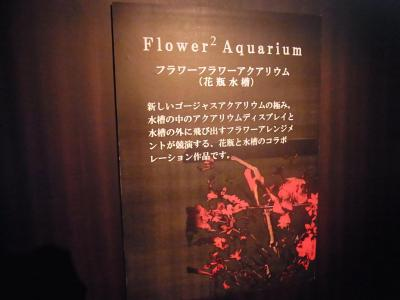 アートアクアリウム展 (21)