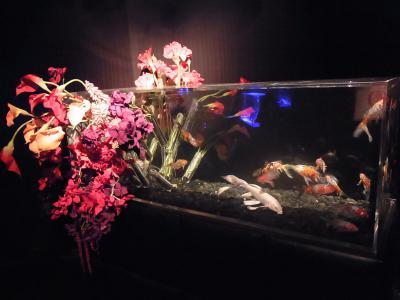 アートアクアリウム展 (17)