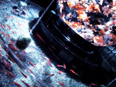 アートアクアリウム展 (89)