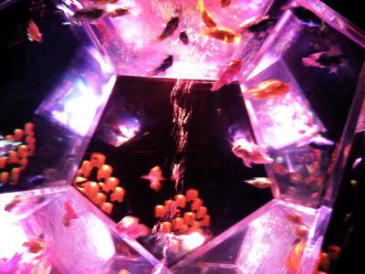 アートアクアリウム展 (94)