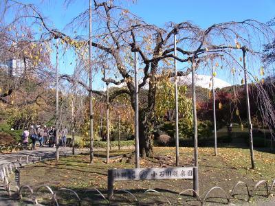 小石川後楽園 靖国神社 (7)