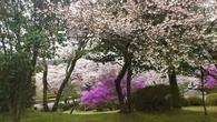 富士霊園_お墓の左手奥に咲いた花_20120422