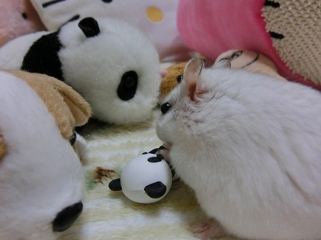 子パンダちゃん?