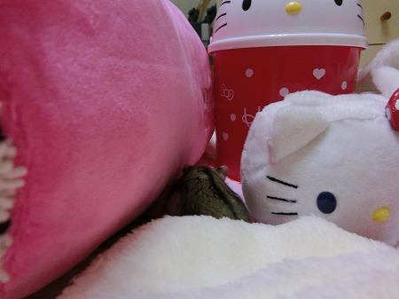 キティちゃんのすきま~
