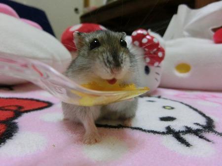スタミノール味でしゅ!