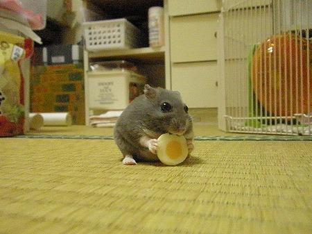 チーズ大好き