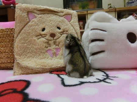 こんばんは~!