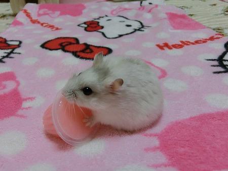 ピンクはいいでしゅね~