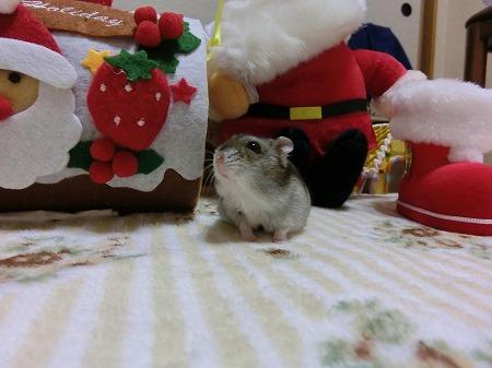 プレゼント?
