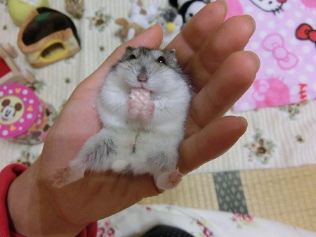 かわいいなぁ~(*^_^*)