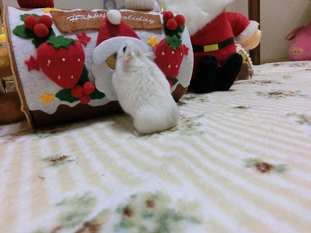 サンタしゃ~ん!