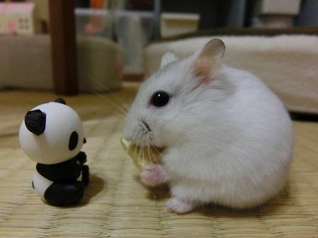 なに? パンダちゃん