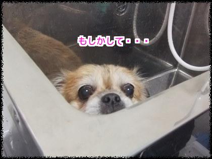 はっちゃん♪はっちゃん