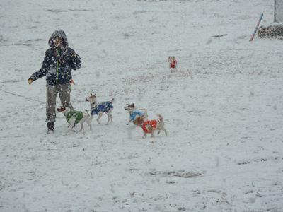雪中ばばと5子