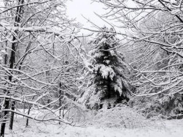 winter-scenes--1_21101043.jpg