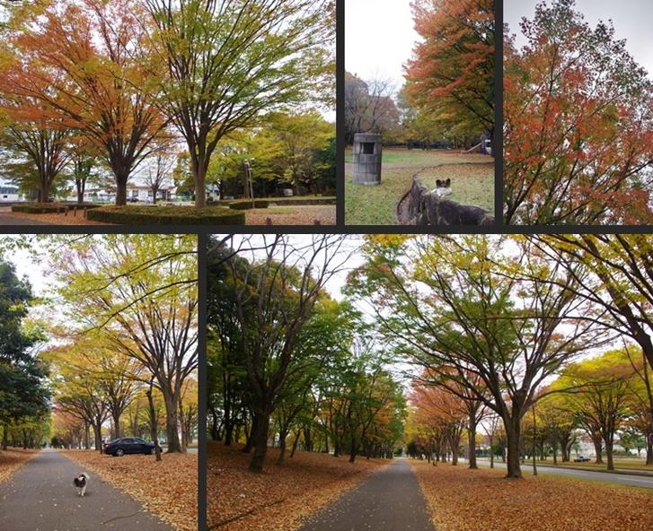 IMGP4636-horz-vert.jpg