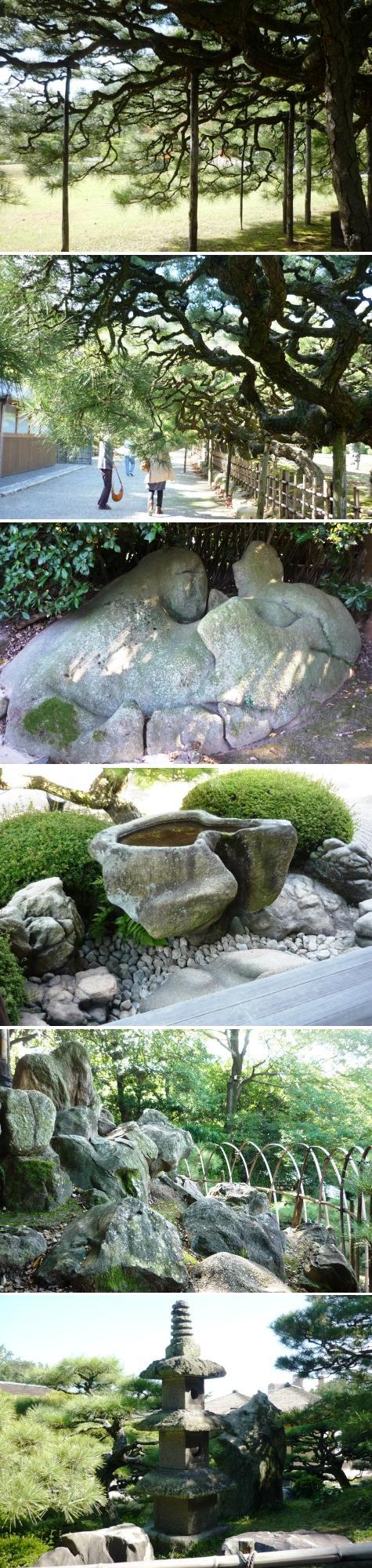 a松と石1330283