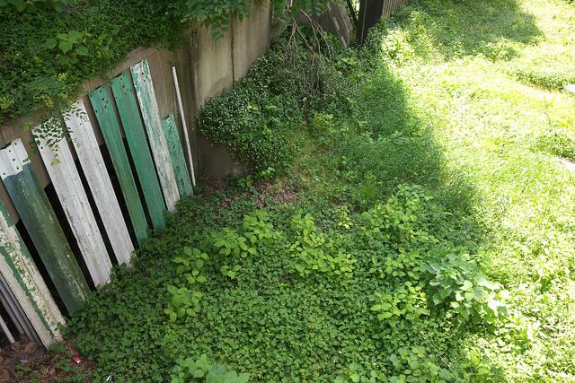 13-穏田川跡