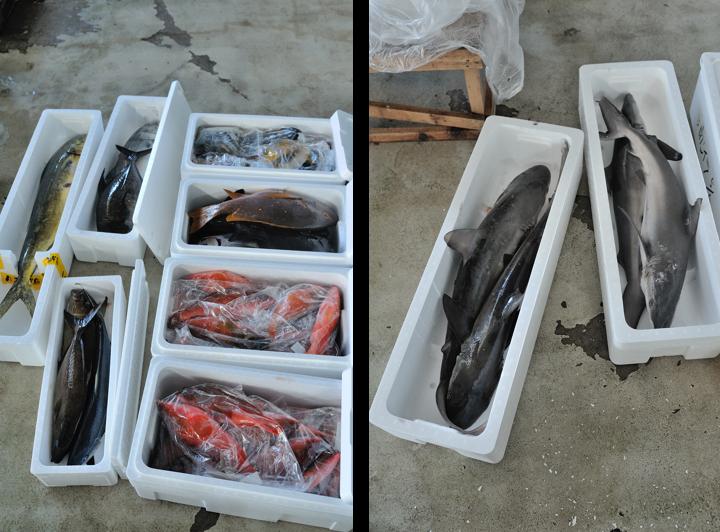 2012豆南諸島漁獲