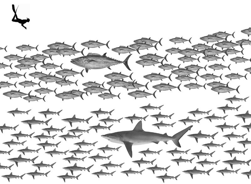 孀婦岩のイソマグロとサメ