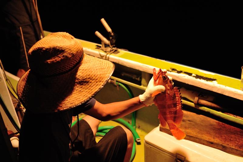 夜釣り(アカハタ)