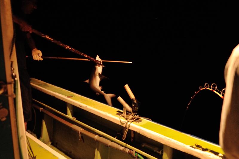 夜釣り(サメ)