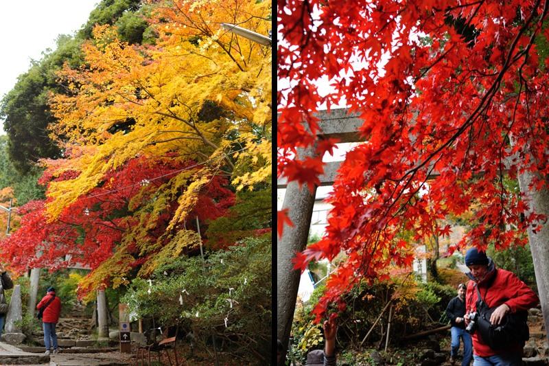 筑波山神社の紅葉