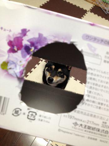 hijiki3032810.jpg