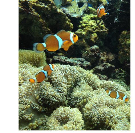 キョート水族館