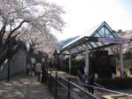 2012年山北の桜 022
