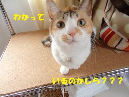 20131221_06.jpg