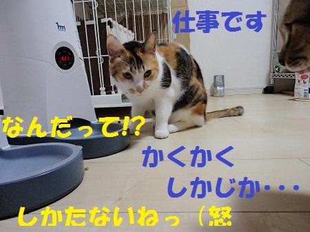 20131231_39.jpg