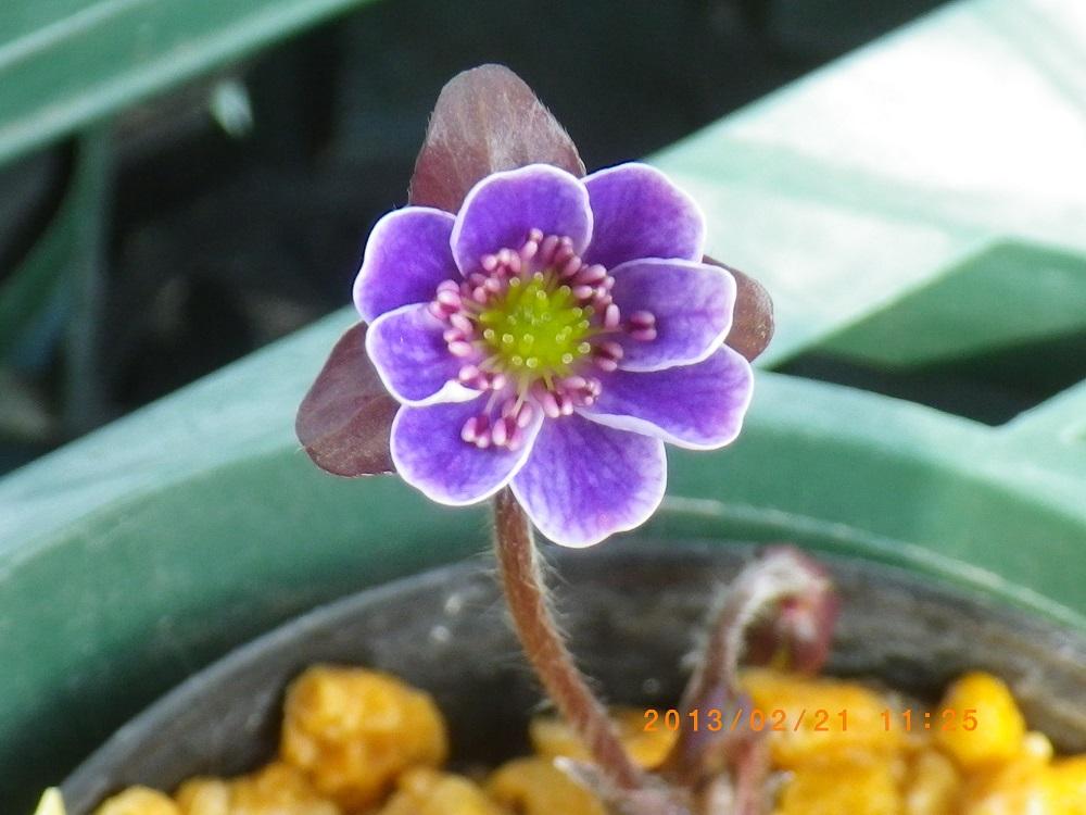 紫標準2-21b