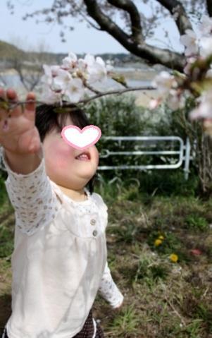 桜がきれいだね