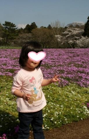 cocoと芝桜