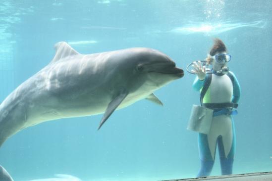 イルカの水中ショー