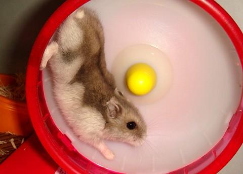 hamster244.jpg