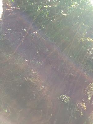 20121120+012_convert_20121120194759.jpg